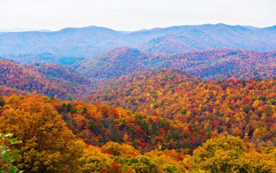 Professional Vision Group asheville-north-carolina-fall-leaves-peak-colors-change-blue-ridge-parkway-drive-03-400x250